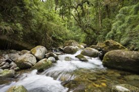 Konrad Wothe - Savegre River running through rainforest, Costa Rica