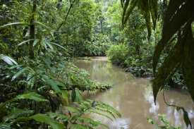 Konrad Wothe - River in lowland rainforest, Braulio Carrillo National Park, Costa Rica