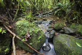 Konrad Wothe - Creek in mountain rainforest, Braulio Carrillo National Park, Costa Rica