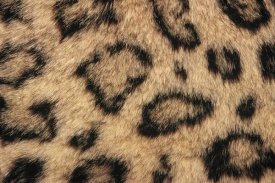 Gerry Ellis - Snow Leopard skin showing spotted pattern, native to Asia