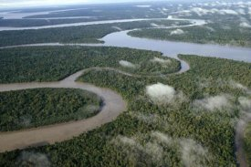 Gerry Ellis - Aerial of tropical rainforest and winding rivers, Kikori Delta, Papua New Guinea