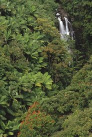 Gerry Ellis - Native and exotic rainforest vegetation in Nanue River Valley, Hawaii