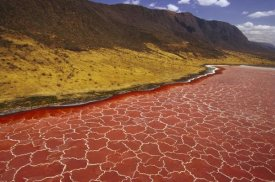 Gerry Ellis - Soda formations on the surface of Lake Natron, Tanzania, east Africa