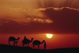 Gerry Ellis - Dromedary camels and Bedouins, Great Sand Sea, Sahara Desert, Egypt