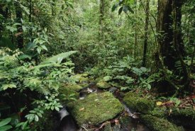 Gerry Ellis - Mountain stream in tropical rainforest, Mt Bosavi, Papua New Guinea