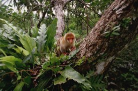 Gerry Ellis - Short-tailed Spotted Cuscus young near Kivaumai Village, Papua New Guinea