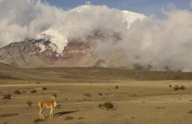 Pete Oxford - Vicuna standing beneath Mt Chimborazo, Andes Mountains, South America