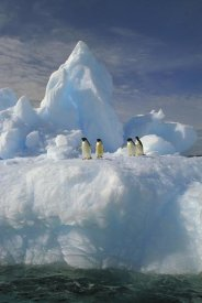 Colin Monteath - Adelie Penguin group rest on iceberg, Terre Adelie Land, east Antarctica