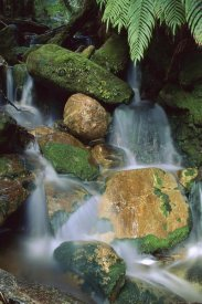 Shaun Barnett - Stream waterfall near Lake Mapourika, New Zealand