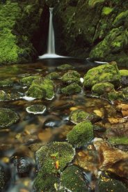 Shaun Barnett - Mossy stream near Loch Maree, Fiordland NP, New Zealand