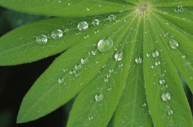 Duncan Usher - Water droplets on green leaves, Europe