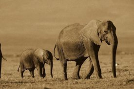 Tim Fitzharris - African Elephant mother and calf, Kenya - Sepia