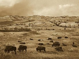 Tim Fitzharris - American Bison herd grazing on praire, Theodore Roosevelt NP, North Dakota - Sepia