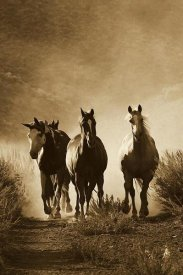 Konrad Wothe - Horse group of four approaching camera, Oregon - Sepia