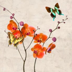 Teo Rizzardi - Orchids & Butterflies I