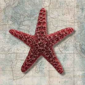 Ted Broome - Starfish