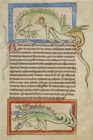English 13th Century - A Hydrus; A Hydra
