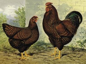 Lewis Wright - Chickens: Golden Wyandottes