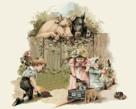 Advertisement - Pigs and Pork: Curious Pigs
