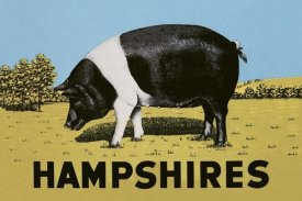 Advertisement - Pigs and Pork: Hampshires