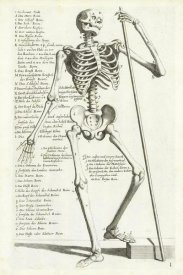 Hieronymus Böllmann - Anatomical diagram showing human skeleton, front view, with legends