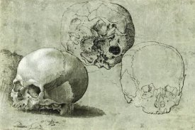 Unknown Southern German - Study of Three Skulls