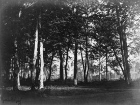 Gustave Le Gray - Fontainebleau, 1849 - Study of Trees and Pathways