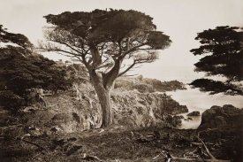 Carleton Watkins - Cypress Point, Monterey, California, about 1880s