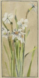 Hannah Borger Overbeck - White Narcissus with Gray Accents