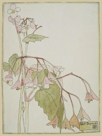 Hannah Borger Overbeck - Beef Begonia