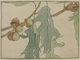 Hannah Borger Overbeck - Oak/Acorns