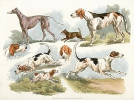 Henry Thomas Alken - Hunting Dogs, 1817