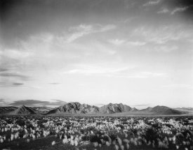 Ansel Adams - Distant mountains: desert and shrubs in foreground near Death Valley National Monument, California - National Parks and Monuments, 1941