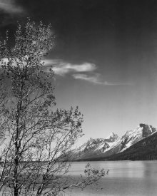 Ansel Adams - View of mountains with tree in foreground, Grand Teton National Park, Wyoming, 1941