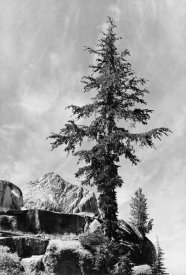 Ansel Adams - Tree and unnamed peak, Kings River Canyon,  proposed as a national park, California, 1936