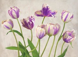 Jenny Thomlinson - Tulipes