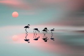 Natalia Baras - Family Flamingos