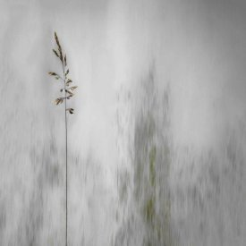 Gilbert Claes - Blade Of Grass