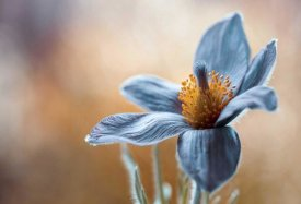 Mandy Disher - Pasque