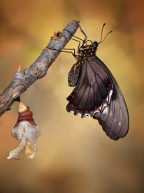 Jimmy Hoffman - Birth Of A Swallowtail