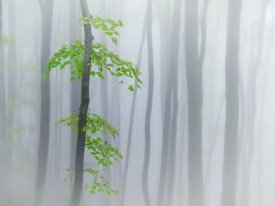 Michel Manzoni - The Fog And Leaves