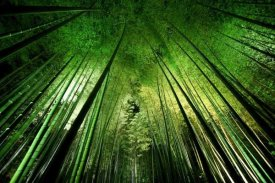 Takeshi Marumoto - Bamboo Night