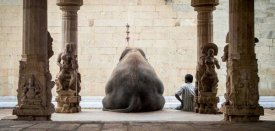 Ruhan - The Elephant and Its Mahot