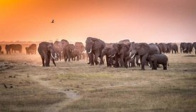 Jeffrey C. Sink - Amboseli Morning Stroll To Starbucks