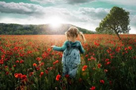 John Wilhelm - Into The Poppies