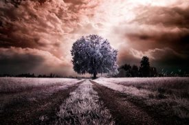 Ghizzi Panizza Alberto - The path to the old tree