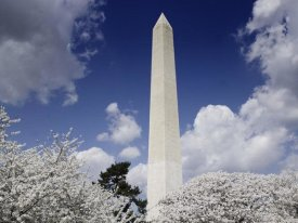 Carol Highsmith - Washington Monument and cherry trees, Washington, D.C.