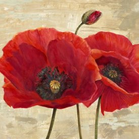 Cynthia Ann - Red Poppies (detail II)