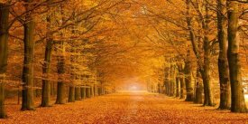 Pangea Images - Woods in autumn