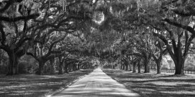 Anonymous - Tree lined plantation entrance,  South Carolina